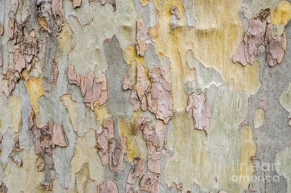Photograph - Nature's Abstract by Sue Smith