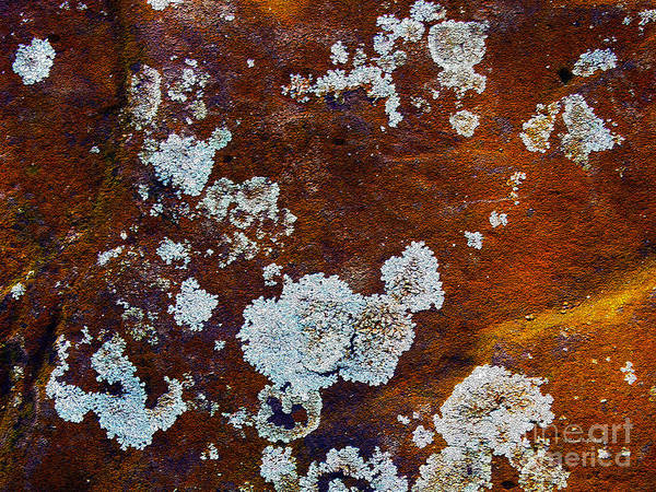 Photograph - Natures Abstractions by Patricia Griffin Brett
