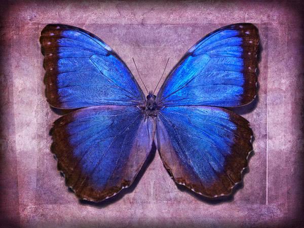 Photograph - Nature's Angels II by Leda Robertson