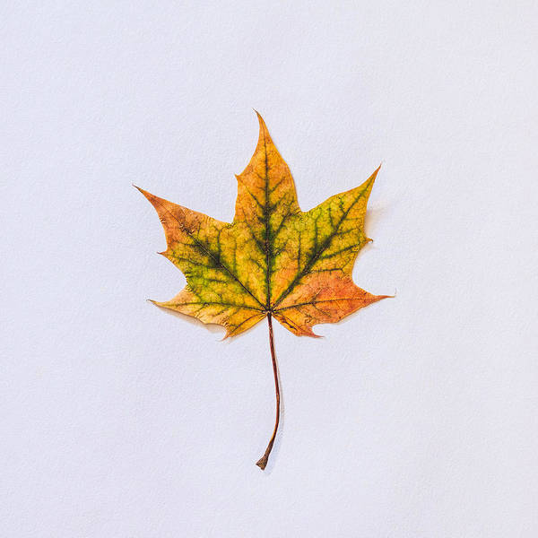 Fall Photograph - Natures Art by Kate Morton