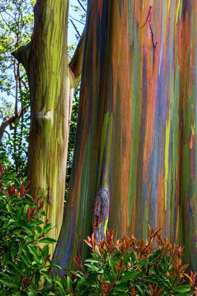 Wall Art - Photograph - Nature's Art by Kelley King