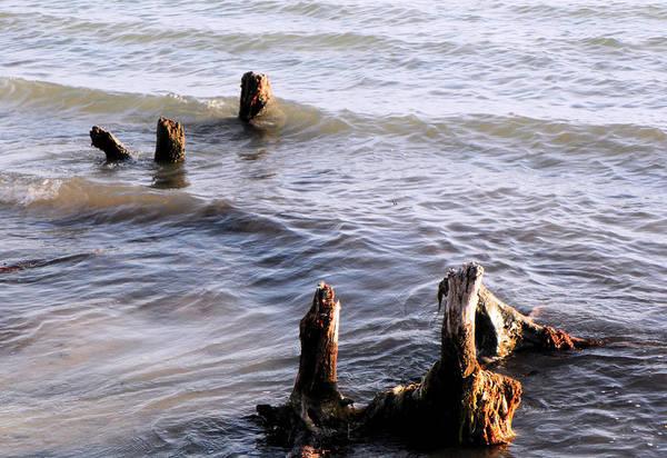 Photograph - Nature's Beach by Rosalie Scanlon