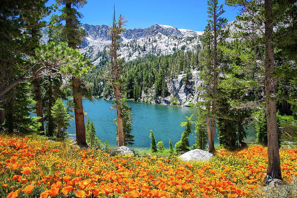Photograph - Nature's Beauty In The Sierra by Lynn Bauer