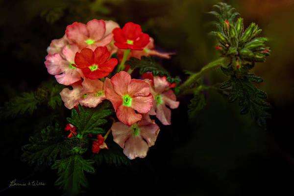 Digital Art - Natures Bouquet by Bonnie Willis