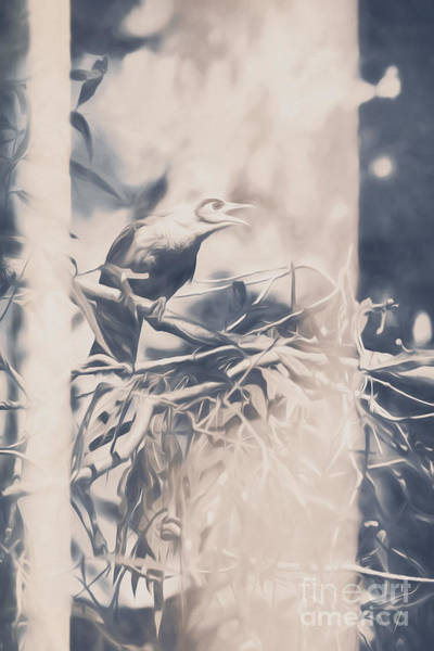 Pastel Drawing Photograph - Natures Call by Jorgo Photography - Wall Art Gallery