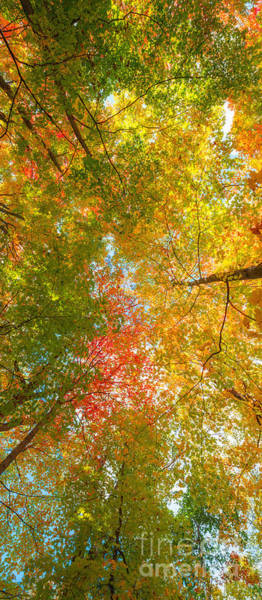 Seasons Change Wall Art - Photograph - Natures Canopy Of Color by Michael Ver Sprill