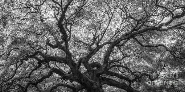 Wall Art - Photograph - Natures Canopy Pano Bw by Michael Ver Sprill