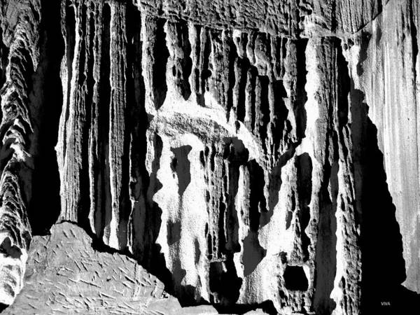 Photograph - Nature's Cathedral B-w by VIVA Anderson