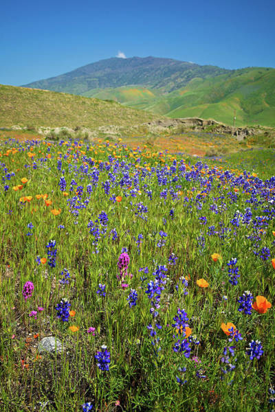 Photograph - Nature's Colorful Palette In Arvin by Lynn Bauer