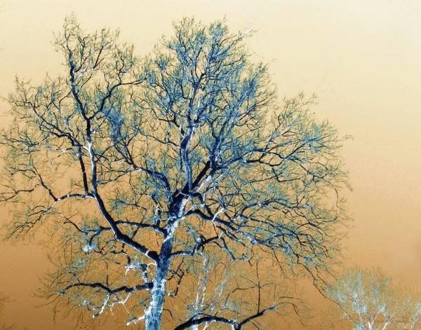 Photograph - Nature's Design by Coleman Mattingly