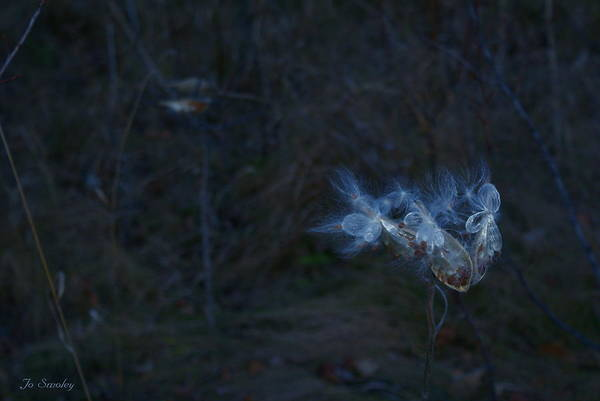 Photograph - Natures Fairies by Joanne Smoley