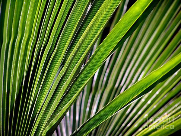 Photograph - Nature's Fan by Steven Huszar