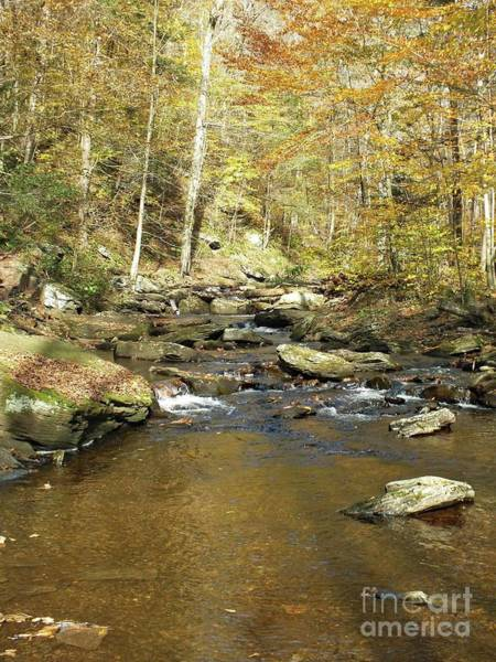 Sullivan County Photograph - Nature's Finest 5 - Ricketts Glen by Cindy Treger