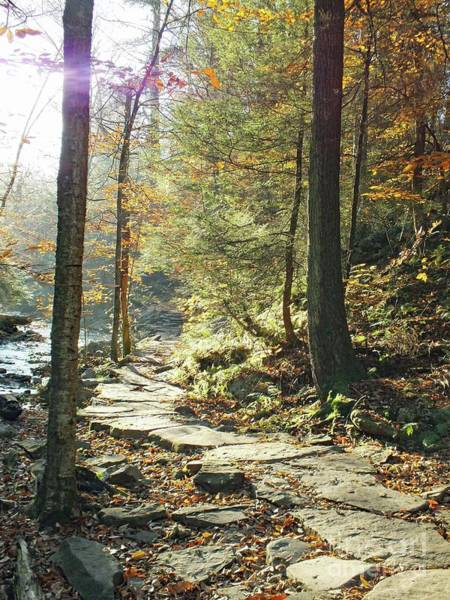 Sullivan County Photograph - Nature's Finest - Ricketts Glen Path by Cindy Treger