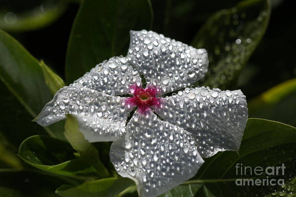 Photograph - Natures Glitter by Joy Watson