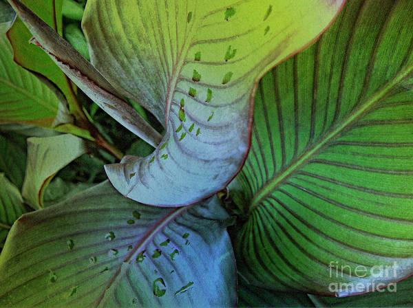 Wall Art - Photograph - Natures Green Palette One by Heiko Koehrer-Wagner