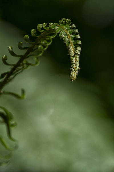Photograph - Nature's Helper by Belinda Greb