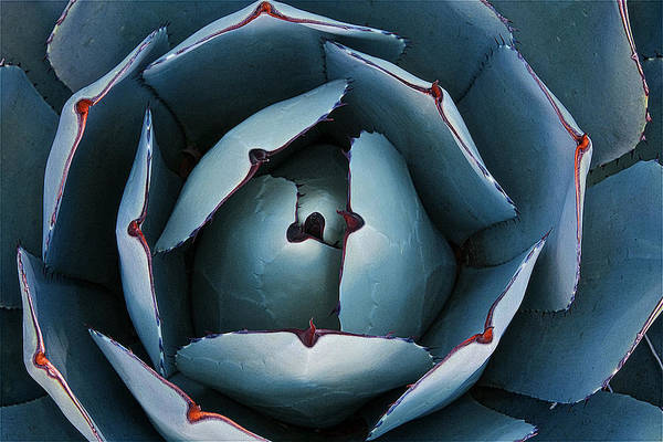 Photograph - Nature's Impression, New Mexico Agave by Flying Z Photography by Zayne Diamond