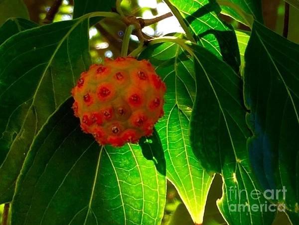Painting - Nature's Koosh Ball by Susan Hendrich