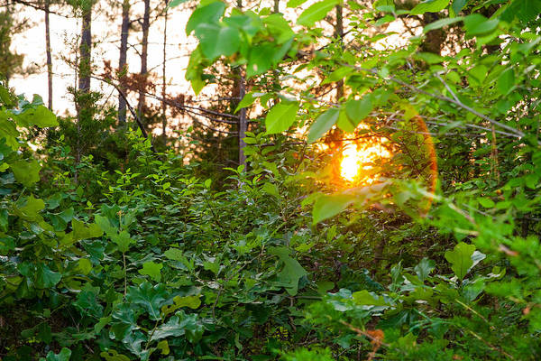 Photograph - Nature's Last Light by SR Green