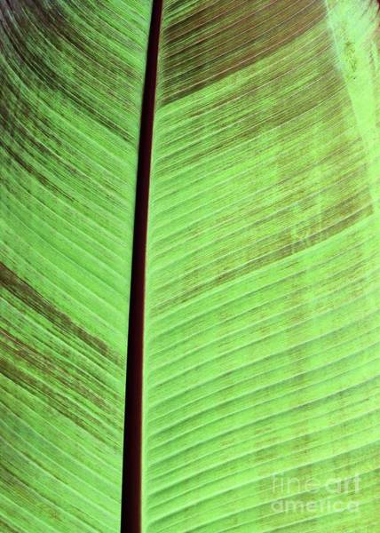 Photograph - Nature's Lines by Sabrina L Ryan