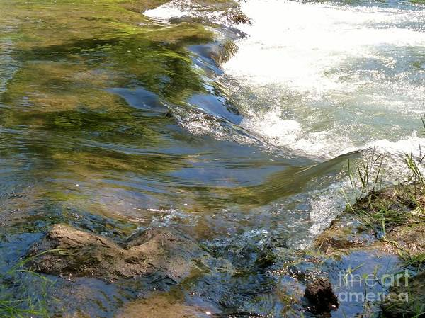 Photograph - Nature's Magic by Rosanne Licciardi