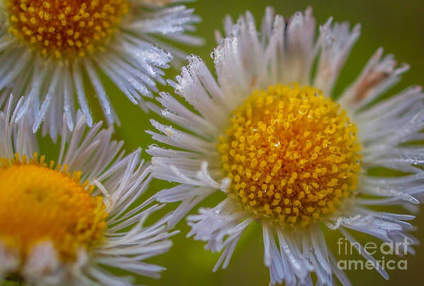 Photograph - Nature's Natural Bouquet by Tom Claud