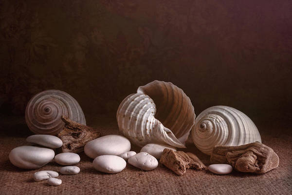 Seashell Photograph - Natures Objects Still Life by Tom Mc Nemar