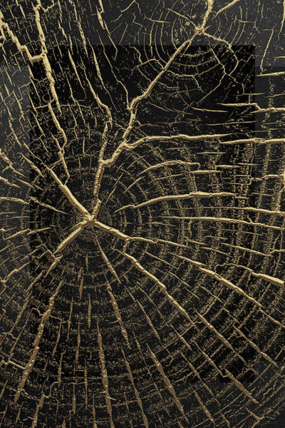 Digital Art - Nature's Secret Code - The Wood Grain Message #1 by Serge Averbukh