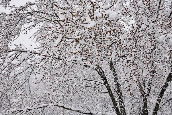 Photograph - Natures Snowy Abstract by Val Arie