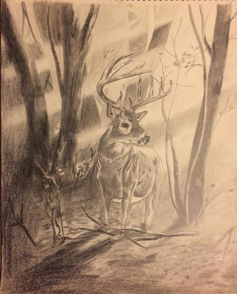 Whitetail Drawing - Natures Sunrise by Tripp Keene