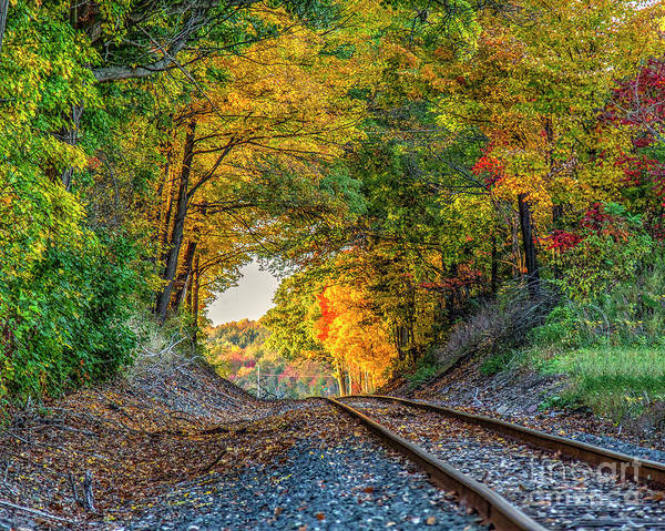 Photograph - Nature's Tunnel by Rod Best
