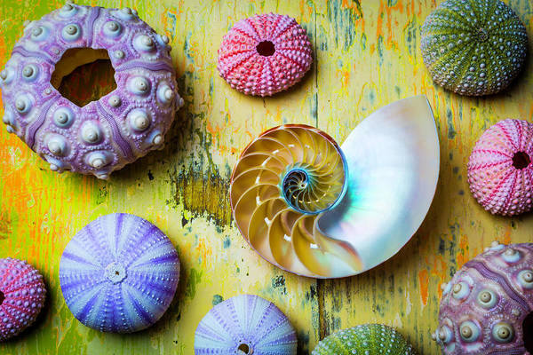 Wall Art - Photograph - Nautilus And Urchins by Garry Gay