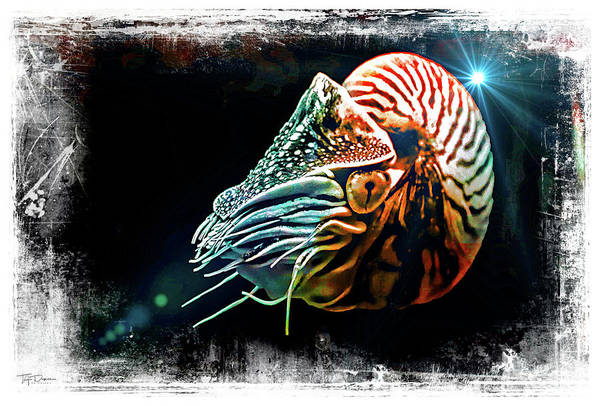 Digital Art - Nautilus Dreams by T A Davies