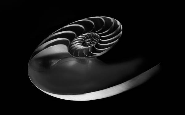 Wall Art - Photograph - Nautilus by Greg Waters
