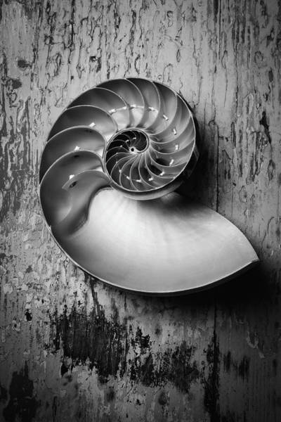 Paint Chips Photograph - Nautilus In Black And White by Garry Gay