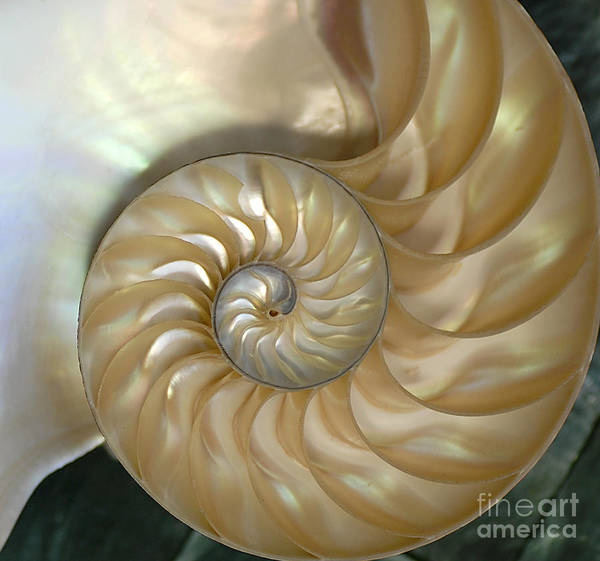 Photograph - Nautilus by Kathleen Gauthier