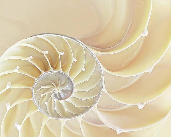 Photograph - Nautilus Natural Cream Spiral by Gill Billington