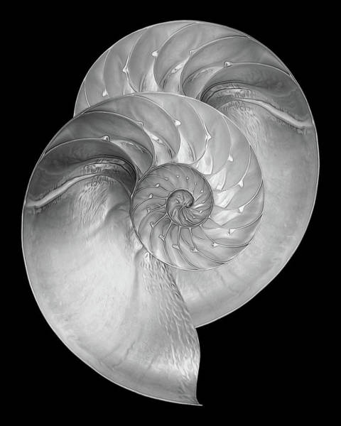Photograph - Nautilus Pair In Mono by Gill Billington