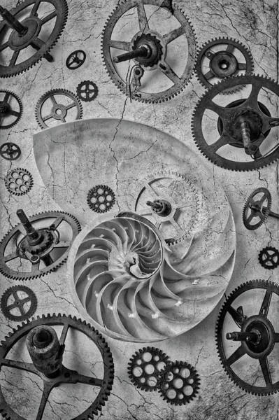 Wall Art - Photograph - Nautilus Shell And Gears by Garry Gay