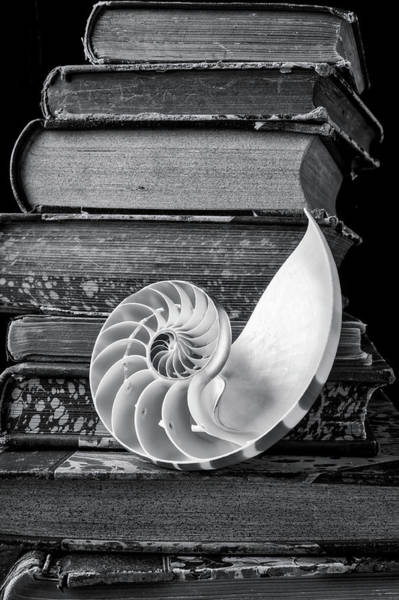 Wall Art - Photograph - Nautilus Shell And Old Books by Garry Gay