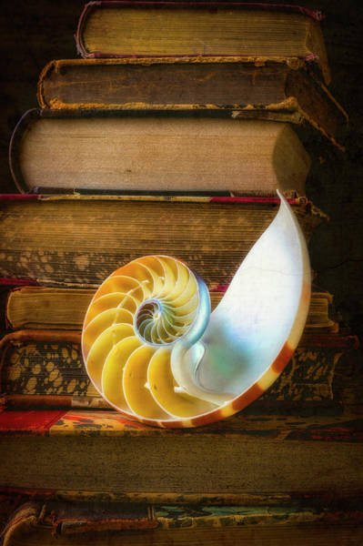 Wall Art - Photograph - Nautilus Shell And Stacked Old Books by Garry Gay