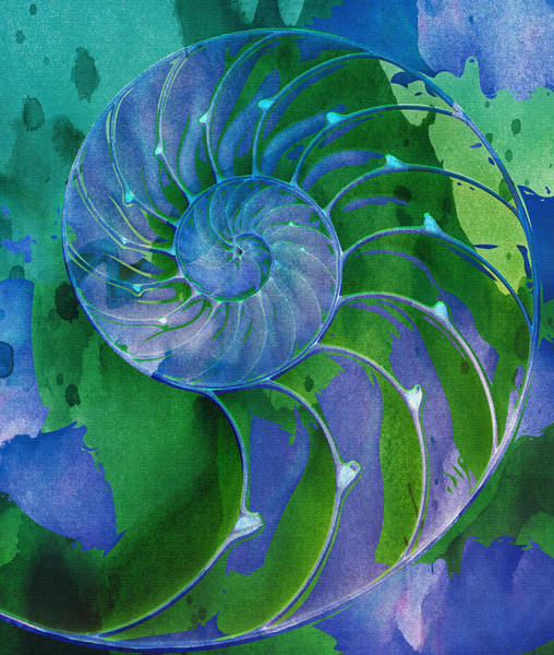 Digital Art - Nautilus Shell by Clare Bambers
