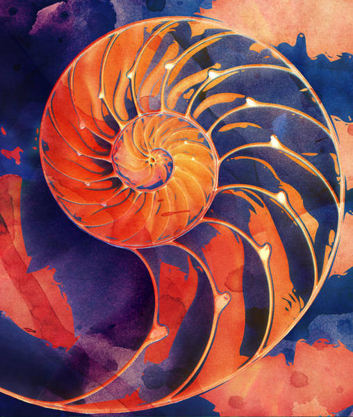 Digital Art - Nautilus Shell Orange Purple by Clare Bambers