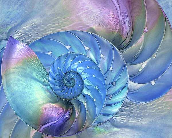 Photograph - Nautilus Shells Blue And Purple Horizontal by Gill Billington