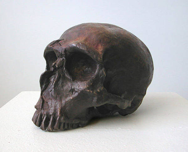 Sculpture - Neaderthal Skull by John Gibbs