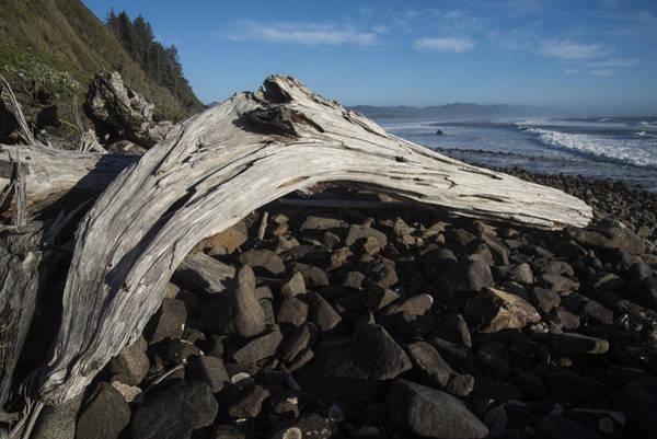 Photograph - Neahkahnie Driftwood by Robert Potts