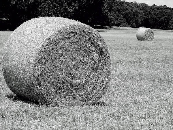 Photograph - Near And Far Hay Rolls by D Hackett