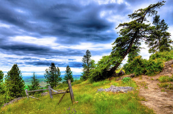 Photograph - Nearing The Top Of Kamiak Butte by David Patterson