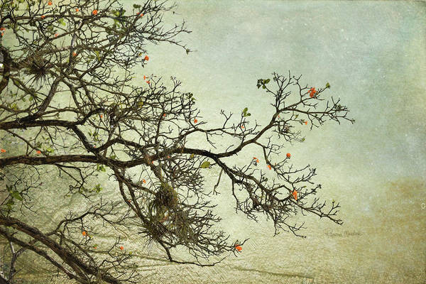 Digital Art - Nearly Bare Branches by Ramona Murdock